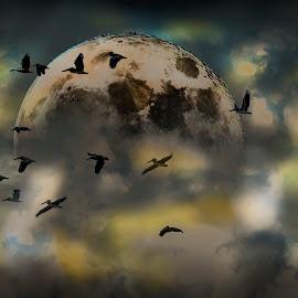 Birds in Moon by William Underwood  - Digital Art Animals