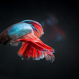 My Corner Fish by Eeezam Mon - Animals Fish