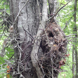 Nest  by Shelley Deckard - Nature Up Close Hives & Nests