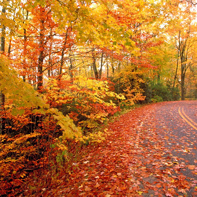 The Road Ahead by Dennis d'Soulz - Landscapes Forests ( autumn, peace, pwcautumn, road, leaves )