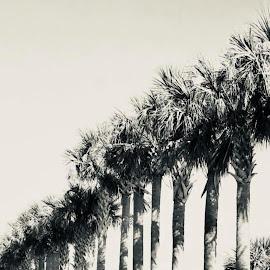 Palms  by Jennifer Rose - Landscapes Travel