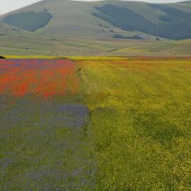 Castelluccio 7 by Bruno Brunetti - Landscapes Prairies, Meadows & Fields ( colors, flowers, italy, castelluccio, fields,  )