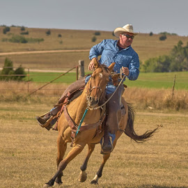 Traget Time  by Jeff Brown - Animals Horses ( tragets, animals, horses, old west )