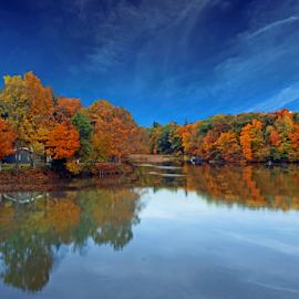 by Dipali S - Landscapes Forests ( orange, michigan, tree, yard, autumn, foliage, bush, leaf, sun, oak tree )
