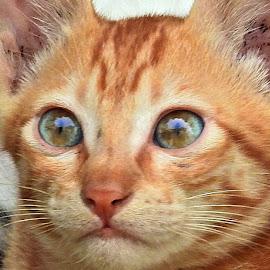 Kittie pie... by Pradeep Kumar - Animals - Cats Portraits