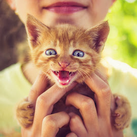 little kitten by Nicolai Cebotari - Animals - Cats Kittens ( expression, cat, person, playful, bright, holding, joy, little, cute, spring, people, together, kid, caucasian, cats, hand, child, looking, love, girl, nature, hands, happy, lifestyle, pets, care, fur, childhood, feline, smile, kitty, animal, kitten, beautiful, funny, white, happiness, youth, fun, domestic, young, mammal, female, pet, outdoor, summer, adorable, small, outside )