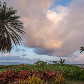 Sunset Point Sunrise by Jim Downey - Nature Up Close Trees & Bushes ( colors, dawn light, place, elements, shapes )