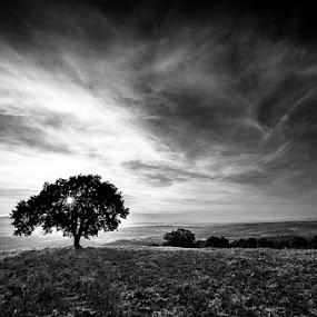 sun in my hair by Lorenzo Moggi - Black & White Landscapes ( #sunset #oak #sun #clouds,  )