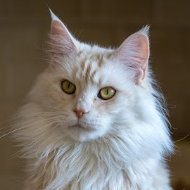 by Kym George - Animals - Cats Portraits
