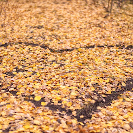 Fall Love by Tony Lobato - Nature Up Close Leaves & Grasses