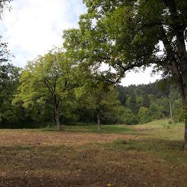 Зелено by Georgi Kolev - Landscapes Prairies, Meadows & Fields ( небе., слънце., ден., дървета., поляна. )