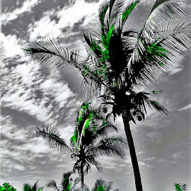 Costa Rican Trees by Nick Remick - City,  Street & Park  Vistas ( clouds, sky, green, costa rica, trees, grey, beach )