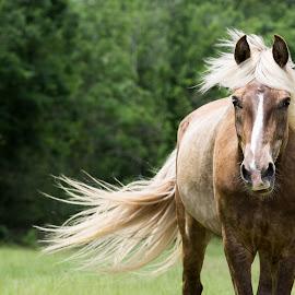 Bristol by Jennifer Cessna - Animals Horses