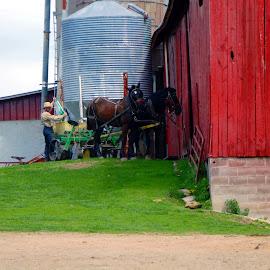 2 horses resting by Jon Radtke - City,  Street & Park  Vistas ( 2 horses resting )