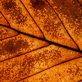 Winter by Martin Davis - Abstract Macro ( cells, brown, skeleton, leaf, veins )