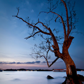 Lonely Branches by Mario Wibowo - Landscapes Prairies, Meadows & Fields ( water, tree, blue, mario wibowo, nikon, lonely, singapore, fotorio )