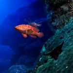 Aquarium Life HD LWP Icon