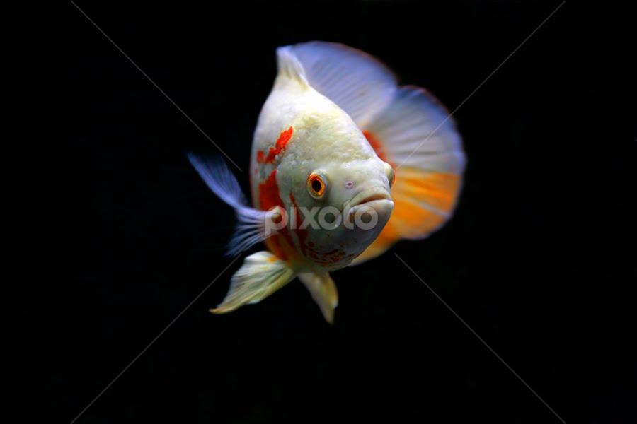 It's me by Anif Putramijaya - Animals Fish