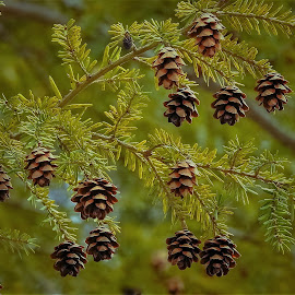Tiny wood creations by Sue Delia - Nature Up Close Trees & Bushes ( forest, tree, wood, pine cones, wils,  )