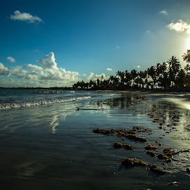 by Vanessa Lima - Landscapes Beaches ( water, sand, cocunut tree, sky, sunset, seascape, beach, relax, tranquil, relaxing, tranquility )