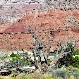Desert heat by Bruce Newman - Landscapes Deserts ( landscape photography, mountains, dead tree, desert,  )