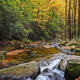 Eastatoe River by Bob Buurman - Landscapes Forests