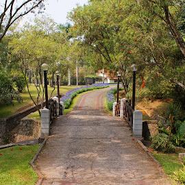 Nusantara Flower Park by Mulawardi Sutanto - City,  Street & Park  City Parks ( keren, cipanas, garden, taman bunga nusantara, travel, indonesia, park )