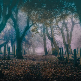 The Graveyard by Adam Lang - City,  Street & Park  Cemeteries ( autumn, fog, path, gravestones, trees, mist, graveyard )