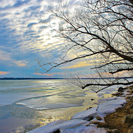 Fading Sun on Ice by Carolyn Taylor - Landscapes Weather ( tree, bay, ice, frozen )