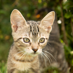 OUTDOOR KITTEN 034.jpg