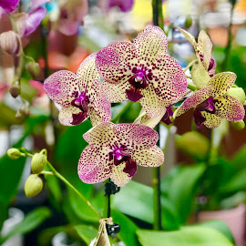 Orchids by Diane Garcia - Instagram & Mobile iPhone ( pink, green, plant, flower )