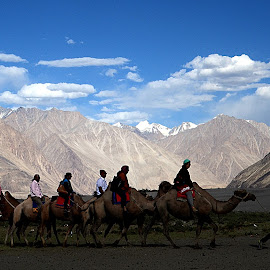 Nubra Valley,Ladakh, by Jaydip Bera - Landscapes Mountains & Hills ( ride, hills, camel, mountain, scenic, valley )