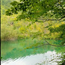 by Tiffany Wu - Nature Up Close Water