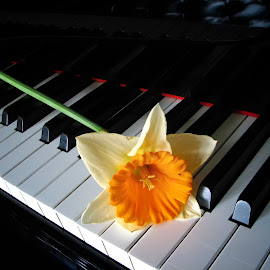 Spring Recital  2389 by Karen Celella - Artistic Objects Musical Instruments ( music, keyboard, piano, instrument, flower )