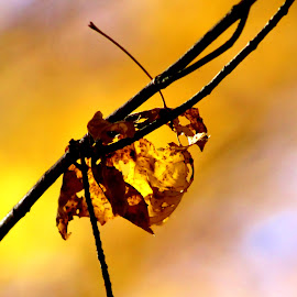 Nature's Gold by Leah Zisserson - Nature Up Close Leaves & Grasses ( autumn, fall, yellow, gold, leaves )