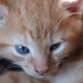by Rebecca Clarke - Animals - Cats Kittens