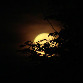 Yellow Moon by Nat Bolfan-Stosic - Uncategorized All Uncategorized ( moon, hot, summer, night, yellow )