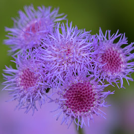 Purple and Pink by Judy Florio - Flowers Flower Gardens