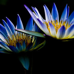 by Johannes Dayrit - Nature Up Close Flowers - 2011-2013