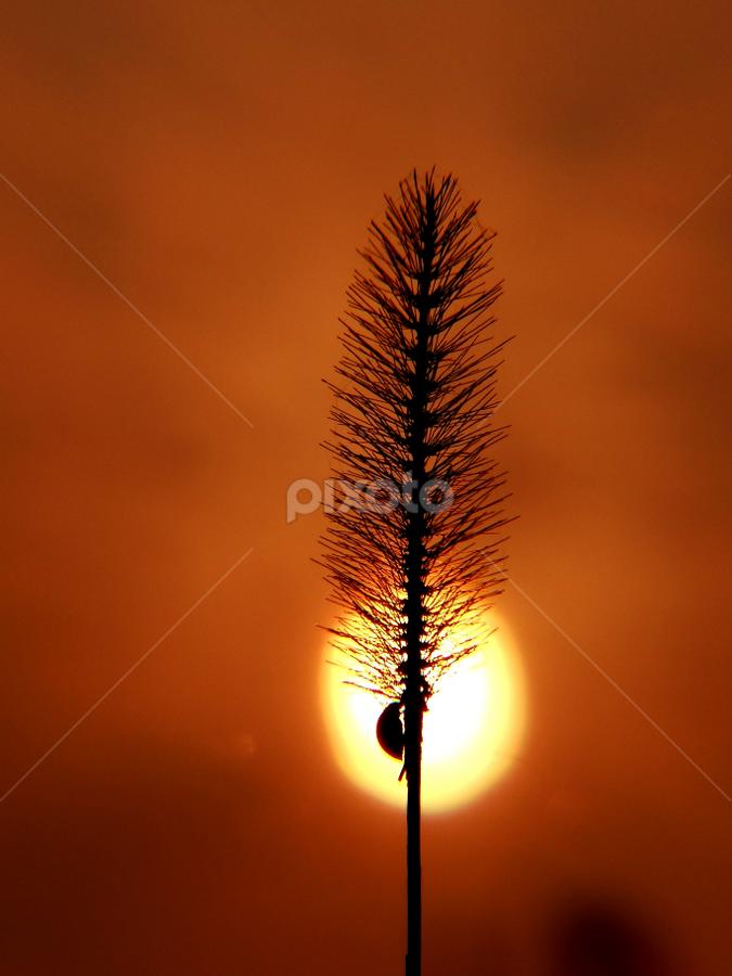 Warming up by Nani Garu - Nature Up Close Leaves & Grasses ( warm, grass, bug, sun light, back light )