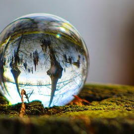Cypress Dream by Holly Stokes - Artistic Objects Other Objects ( crystal ball, glass ball, lake, cypress trees,  )