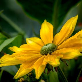 by Nikos Diavatis - Flowers Single Flower