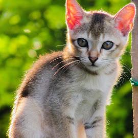 Look by Nayan Jyoti Kalita - Animals - Cats Portraits ( cat, cat eyes, assortment, cat portrait, india )