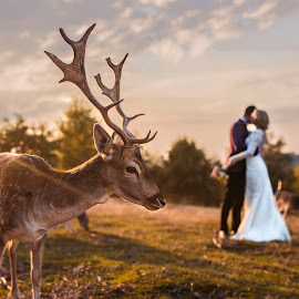 In love by Pop Adrian - Wedding Other ( nature, wedding, sunset, trash the dress, deer )