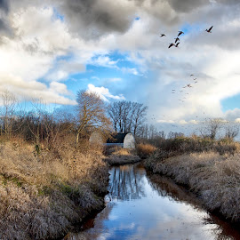 Geese by John Gore - Landscapes Prairies, Meadows & Fields
