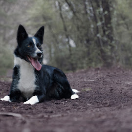 Happy!! by Hilda Palm - Animals - Dogs Portraits ( playful, forest, dog )