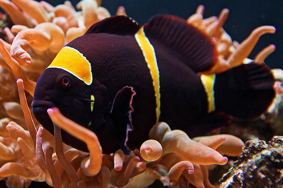 by Jeff Wrigley - Animals Fish