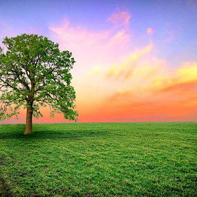 by Димитър Чобанов - Landscapes Sunsets & Sunrises ( land tree sunset green beautiful )