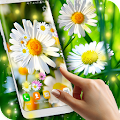 Free Daisies HQ Live Wallpaper APK for Windows 8