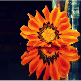 reflecting by Rima Biswas - Artistic Objects Other Objects ( orange, reflection, life, glass, still, yellow, flower )